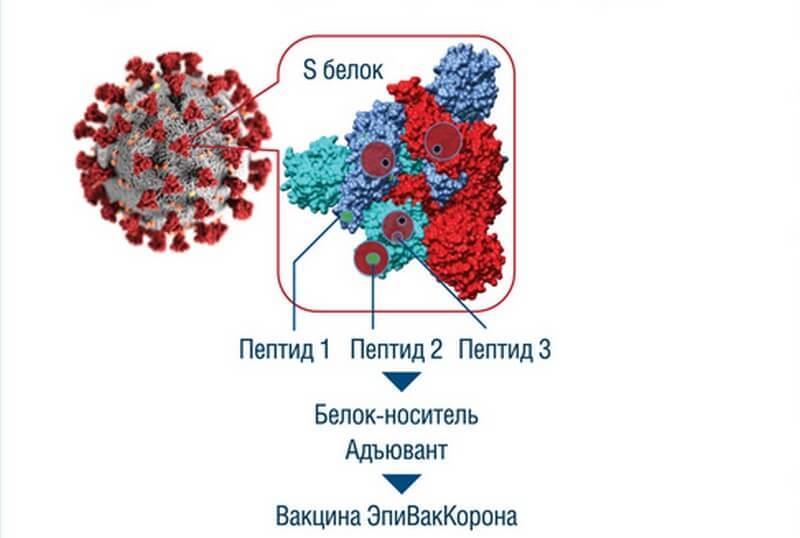 Формирование иммунитета